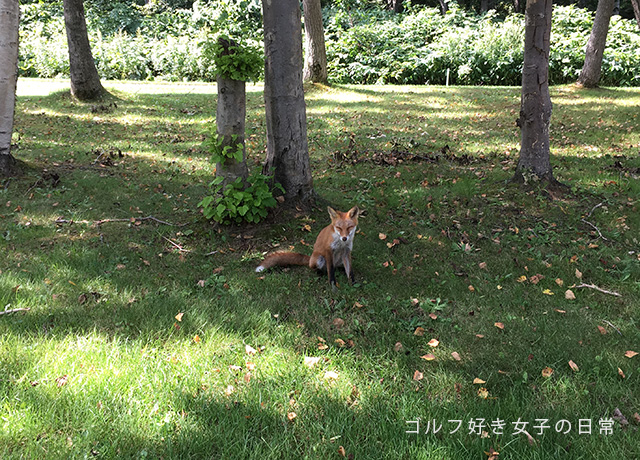 golf_hanazono4